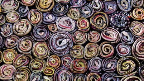 1214-indonesia-dead-snakes-coiled-market-670