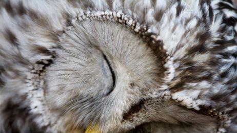 Śpiące zwierzęta