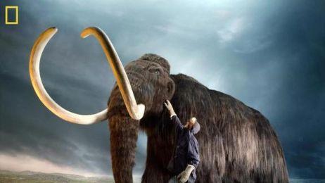 Mamut włochaty
