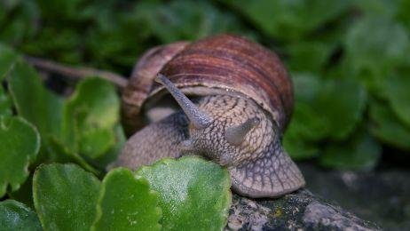 snail-880720_1280