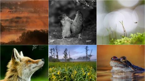 Najlepsze zdjęcia przyrodnicze