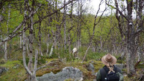 Wędrówka przez fińską tajgę