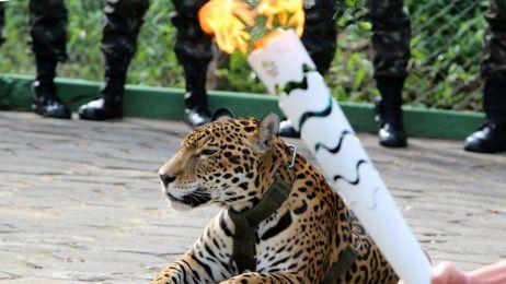 Jaguar Juma zastrzelony