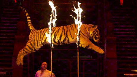 Koniec cyrków ze zwierzętami w UE - jest taki pomysł