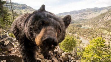 Niedźwiedź zaatakował biegaczkę