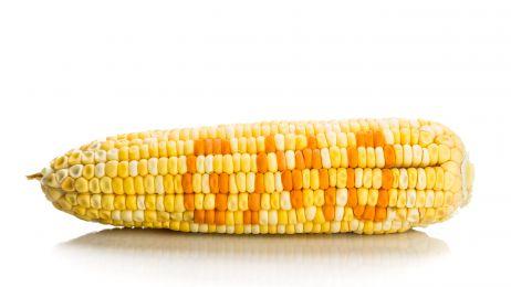 """Nobliści do ekologów: """"Przestańcie atakować GMO!"""""""