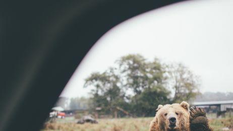 Lasy, góry, mgła... Zdjęcia Dylana Fursta