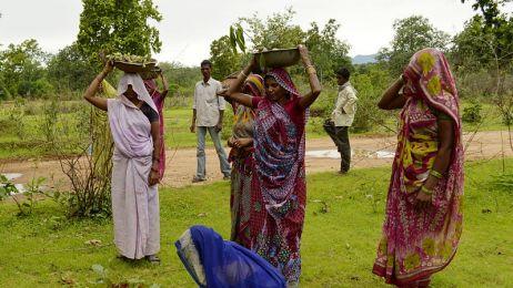 Sadzenie drzew w Indiach