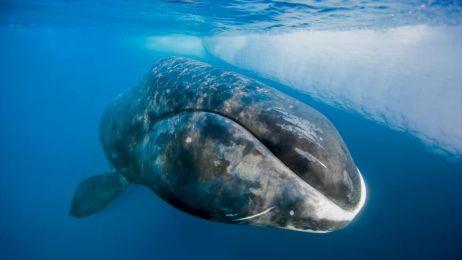 Poznaj zwierzę, które żyje 11.000 lat.