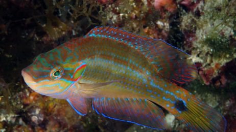 Samce są ospałe, samice nie mają ochoty. Co zabija miłość ryb? Nie zgadniesz