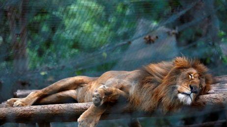 W wenezuelskich ogrodach zoologicznych zwierzęta padają z głodu