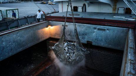 Pracownicy portowi używają żurawi do rozładunku zamrożonych tuńczyków z chińskiego statku towarowego w porcie rybackim General Santos na Filipinach.