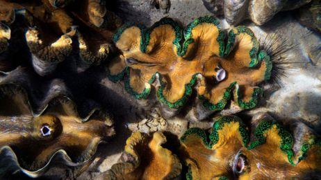Rafy w Morzu Południowochińskim