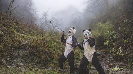 Nie są już zagrożone, ale daje trzeba im pomagać. Zobacz jak ratuje się pandy.