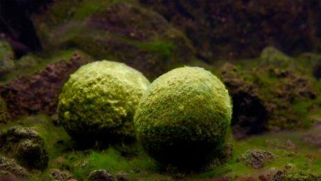 Co się stało z jedną z najbardziej niezwykłych roślin na świecie?