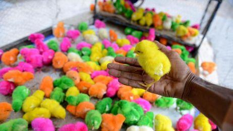 Ładne kolorowe ptaszki? Raczej smutny obraz tego do czego zdolni są ludzie dla pieniędzy