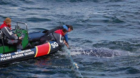 Na ratunek morskim zwierzętom