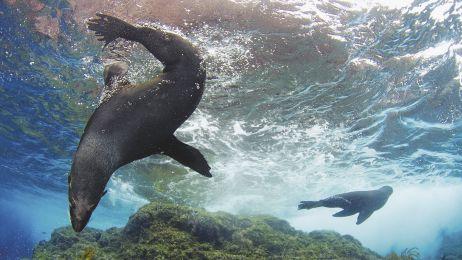 Chile ochrania ocean