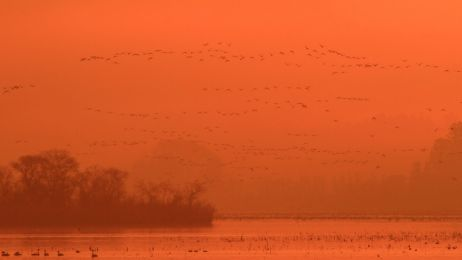 Obserwujesz ptaki? Podziel się informacją.  Wspólnie stworzymy Atlas ptaków lęgowych Europy