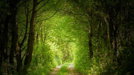 Spacer w lesie