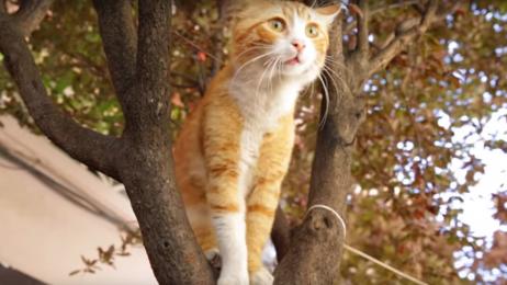 """""""KEDI – sekretne życie kotów"""""""