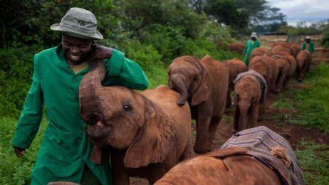 Opiekun słoni