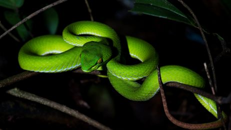 Zielona żmija