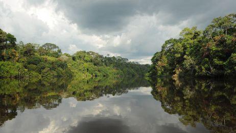 Na przełaj przez Dżunglę