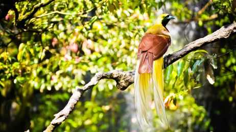 Rajski ptak