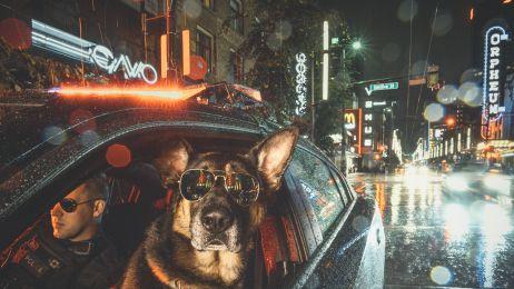 Mądre i bohaterskie! Policyjne psy pomagają chorym na raka i czarują na sesji zdjęciowej