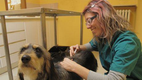 """""""Skazują swojego psa na śmierć"""". Antyszczepionkowcy nie chcą szczepić swoich zwierząt"""