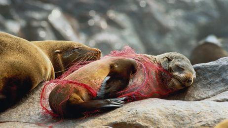 Milion gatunków zagrożony wyginięciem. Wszystko przez konsumpcję [RAPORT]