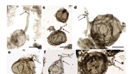 """""""To zmienia nasze spojrzenie na świat"""". Naukowcy odnaleźli grzyba, który ma... miliard lat"""