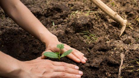 Sadzenie drzew uratuje nas przed katastrofą klimatyczną. Zacząć musimy od zaraz!