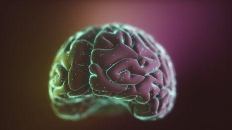Połączyli 3 mózgi w sieć. Komunikacja myślami staje się możliwa?