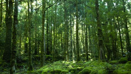 Co można bezpiecznie jeść w lesie? Ta wiedza może ci się przydać