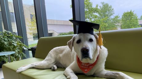 Ten labrador ma doktorat, a ty nie fot. Virginia Tech