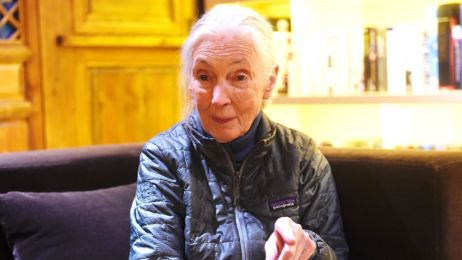 Jane Goodall fot. Getty Images