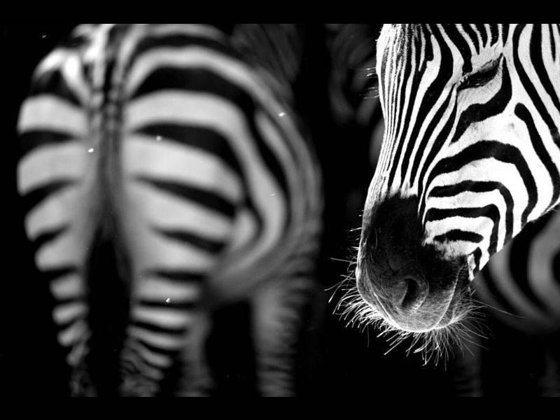 1. Zdjęcie  - Galeria tygodnia: W świecie zwierząt