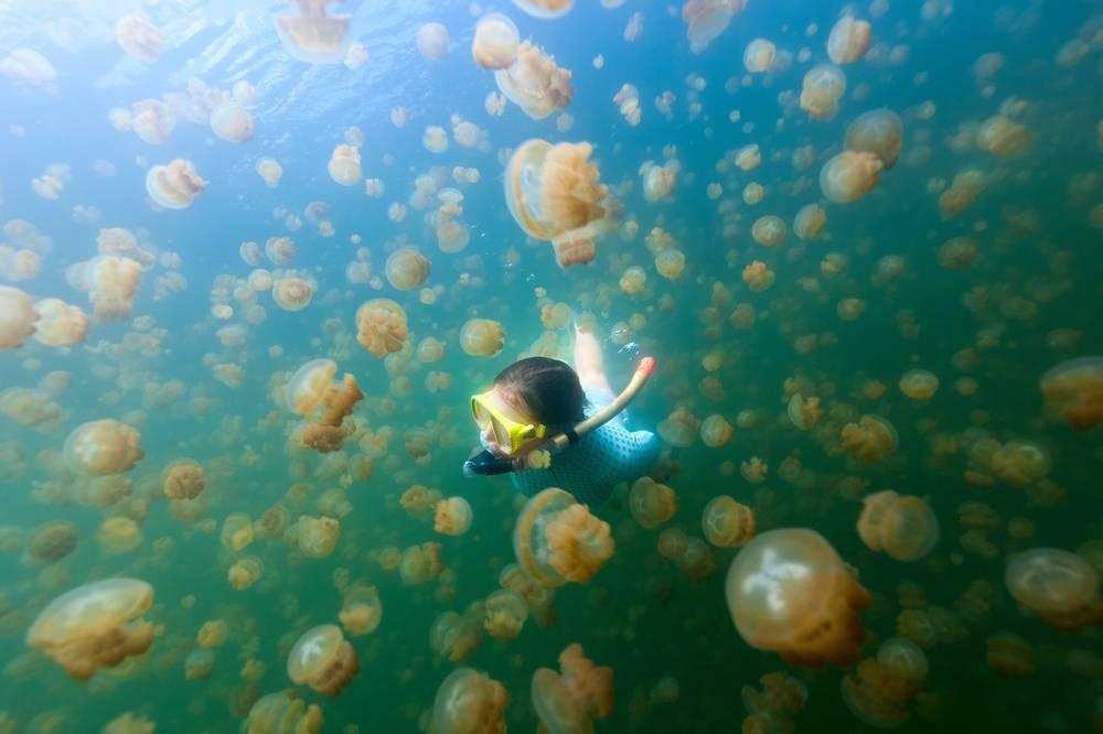 1. Zdjęcie  - Zupa z meduz