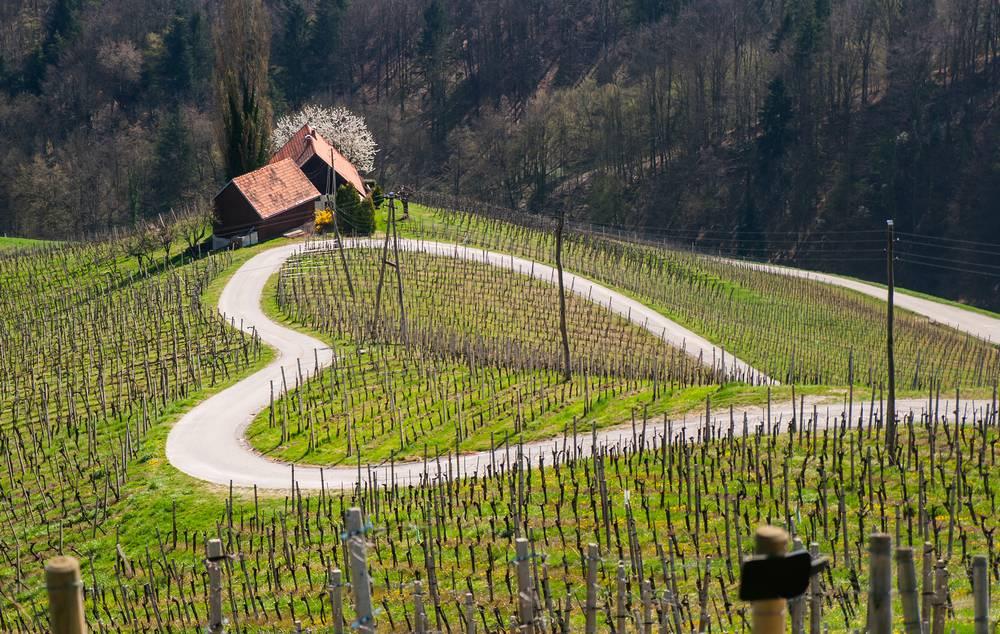 5. Zdjęcie  - Słowenię naprawdę warto odwiedzić. Przekona Cię tych 7 miejsc