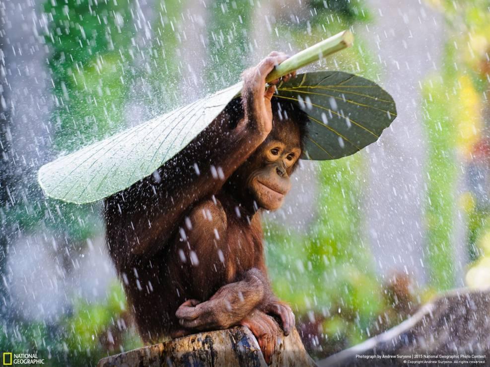 1. Zdjęcie  - Martwe jezioro, parasol orangutana i tornado mijające dom o włos! Zobacz najlepsze zdjęcia 2015