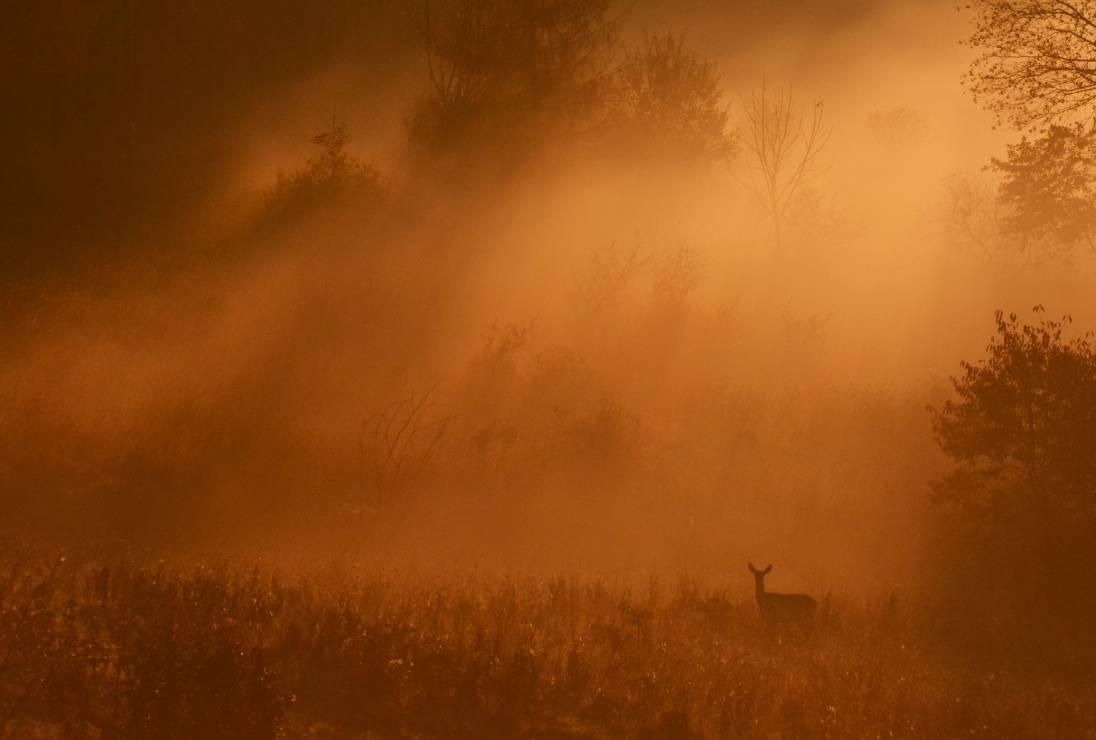"""11. Zdjęcie  - KONKURS fotograficzny """"Po stronie natury"""" rozstrzygnięty. Mamy listę nagrodzonych [GALERIA]"""