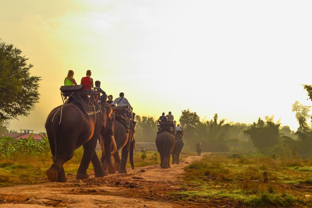 Ciemna strona tajskiej turystyki - Przejażdżka na słoniu? Nie, dziękuję. Ciemna strona tajskiej turystyki