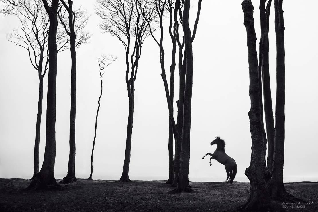"""""""Lost & found"""" - To najpiękniejsze zdjęcia koni, jakie kiedykolwiek zobaczycie [GALERIA]"""