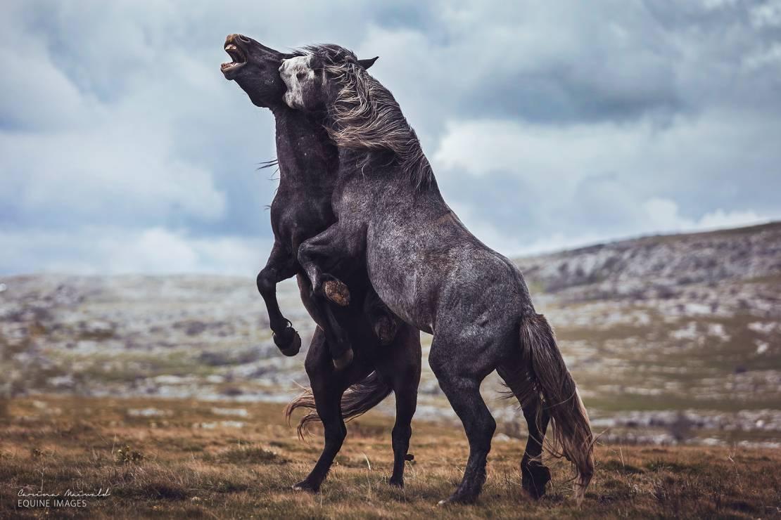 """Bośnia """"Siła młodości"""" - To najpiękniejsze zdjęcia koni, jakie kiedykolwiek zobaczycie [GALERIA]"""