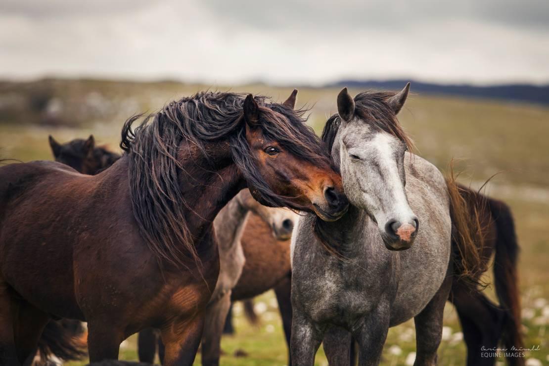 """Bośnia – """"Czułość"""" - To najpiękniejsze zdjęcia koni, jakie kiedykolwiek zobaczycie [GALERIA]"""