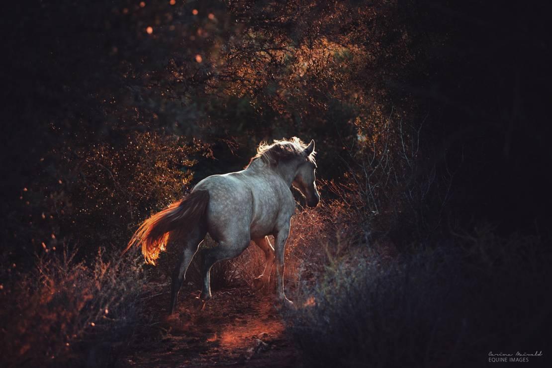 W stronę światła - To najpiękniejsze zdjęcia koni, jakie kiedykolwiek zobaczycie [GALERIA]