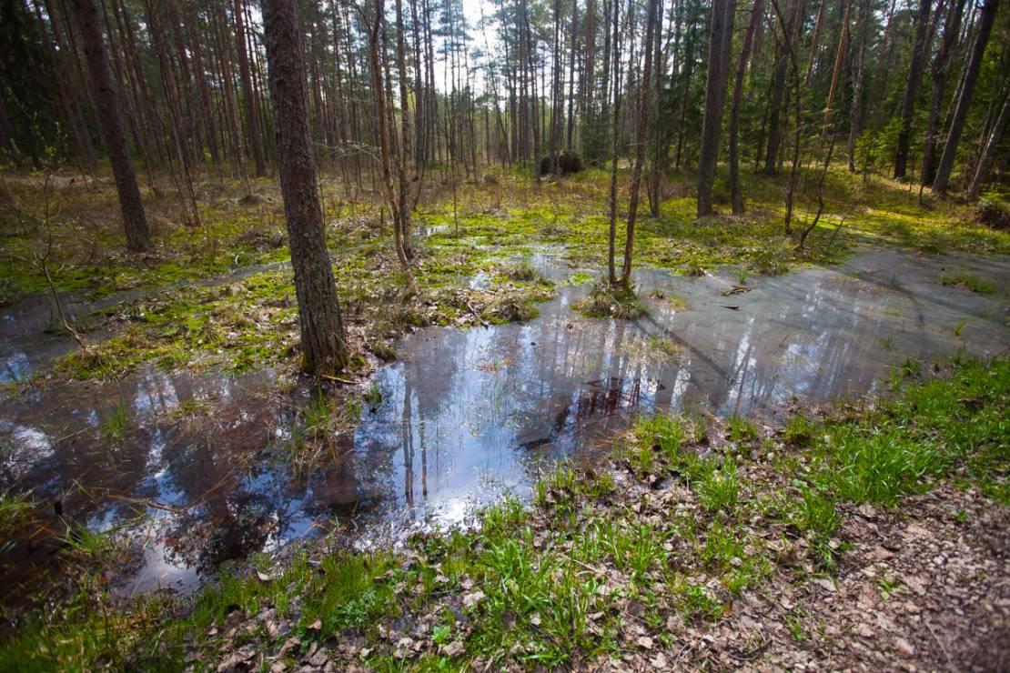 To miejsce jak z powieści J.R.R. Tolkiena. Magiczne bagna Łotwy - To miejsce jak z