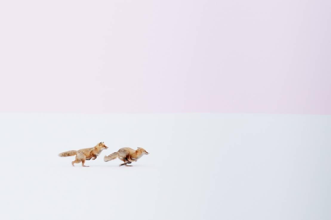 Japoński fotograf - Pełne harmonii, a jednocześnie zaskakujące. Zobacz niezwykłe fotografie